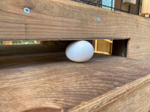 引っかかる卵さん